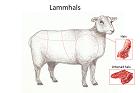Lammhals, nacke, huvud