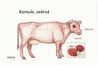 Komule, oxkind