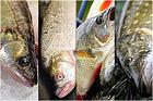 Om fiskar