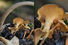 Plocka svamp