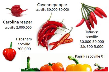 Chilifrukters hetta och smak