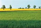 Vegetabiliska gräddprodukter
