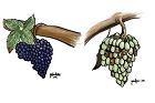 Druvsorter till vin