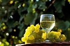 Halvtorra vita viner