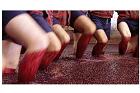 Tillverkning portvin