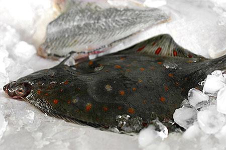 Hantering färsk fisk, skaldjur