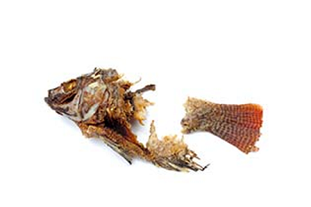 Fiskbuljong, fiskfond