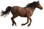 Om hästkött