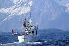 Havets rikedom, fiske