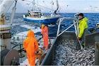 Om fiskemetoder
