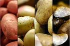 Om potatis