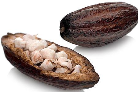 Kakaofrukt med kakaobönor (klicka för större bild)