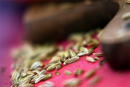 Kryddfänkål - fänkålsfrön