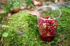Rårörda tranbär - recept